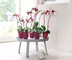 Orchidstrating interior design with elho...https://www.gardenforum.co.uk/products/gifts-and-christmas/
