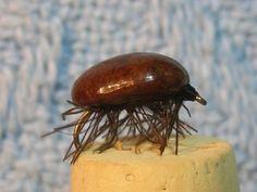 DeCaff Bug