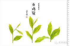 #白鸡冠 #武夷岩茶 #wuyi #cliff #tea #baijiguan