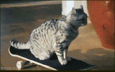 【画像】JK「バイト先のローソンにカルガモいっぱい来wwwたwwwww」パシャッ:キニ速