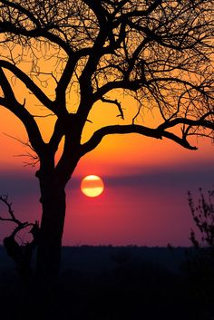Colors of Motswari | A vibrant sunset in Motswari Private Game Reserve in Greater Kruger | by Mario Moreno