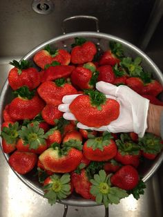 Yummy strawberries @ RBSMS   Pasco County Schools