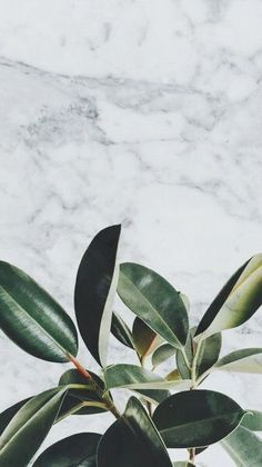 New Ideas Quotes Wallpaper Phone Backgrounds Desktop Wallpapers Flowers Wallpaper, Lines Wallpaper, Plant Wallpaper, Animal Wallpaper, Tumblr Wallpaper, Colorful Wallpaper, Nature Wallpaper, Wallpaper Quotes, Phone Backgrounds