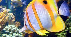 Reef Fish, Marine Fish, Coral, Aquarium Supplies & more ...
