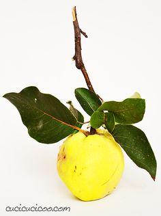 Una ricetta del ricettario Il Talismano della Felicità diventa più moderna: Come fare la confettura di mele cotogne in un modo più semplice (e delizioso!) #melacotogna #cotognata