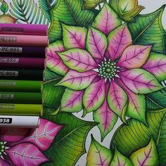 These are the colours that I used in the pink and green poinsettia. With very light hand, I layered down the pink and green colour (picture 2) and I kept layering the colours until it is saturated. And then I used the white coloured pencils to blend everything together. Sometimes the colours will get wash off or less intense after the white coloured pencils, I will then intensify the colour by adding the green and pink again. Hope this helps guys.  . . #prismacolorpremier #johannaschristmas