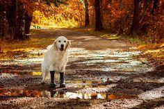Du stellst dir die Frage, wie du deinen Hund gut in Szene setzen kannst? Du möchtest ein Portrait eines Hundes machen oder auch mal seine Dynamik in der Bewegung darstellen? Du fragst dich, welches Equipment …