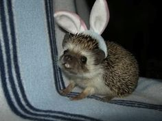 You can even dress a hedgehog for Easter.