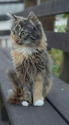 Cat beauty