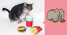 I Recreated Pusheen Stickers With My Cat (13 Pics)   Bored Panda