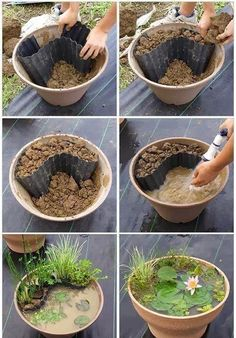 Create your own Lily pond on a pot