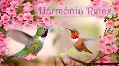 HARMÓNIA Relax * Stressz oldása * Inspiráció tanuláshoz, al. Meditation, Songs, Youtube, Animals, Music, Animales, Musik, Animaux, Muziek