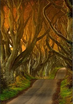Dark Hedges in Ballypatrick Forest, Northern Ireland | See More Pictures