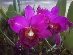 Flora y fauna Colombiana, nuestra flor emblema.