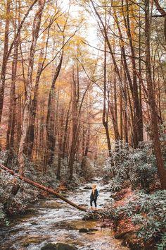 Ellijay GA Travel Guide: A Weekend in the Blue Ridge Mountains Adventure Awaits, Adventure Travel, Blue Ridge Georgia, Mountain Pictures, Camping Aesthetic, Ga In, Mountain Photography, Blue Ridge Mountains, Appalachian Mountains