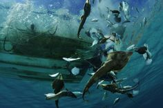 Guitarfish, rays, and other bycatch are tossed from a shrimp boat. La Paz, Mexico. (Photo by Brian Skerry) http://avaxnews.net/appealing/Life_Under_the_Ocean_Waves_by_Photographer_Brian_Skerry.html
