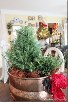Rosemary tree in a copper pot for Kitchen counter