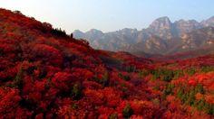 Beautiful Nature - Autumn 1080p HD