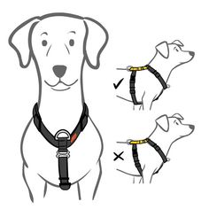 This no-pull dog harness transforms walks from stressful