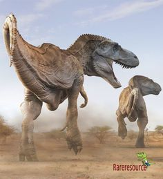 """Tyrannosaurus rex (""""tyrant lizard king""""), also recognized colloquially as The King of the Dinosaurs, was a huge carnivorous theropod dinosaur from the Upper Maastrichtian, the last stage of the Cretaceous time, 65–66 million years ago.  For more details visit:http://www.rareresource.com/tyrannosaurus%20rex.htm"""