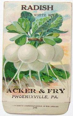 ACKER & FRY, Radish, White, Vintage Seed Packet