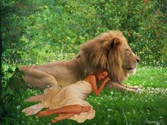 Lion Of Judah Jesus, Pet Lion, Life In Paradise, Lion Photography, Fairy Silhouette, Christian Warrior, Lion Love, Lion Wallpaper, Bride Of Christ