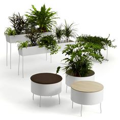 Gardening Indoor Flower Pots : Eco Friendly Flowerpot Design For Outdoor And Indoor Planters Green Pedestals By Sofia Lagerkvist Oasis, Rectangular Planters, Decoration Plante, Indoor Planters, Modern Planters, Indoor Gardening, Interior Plants, Cool Plants, Potted Plants