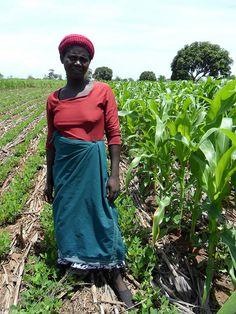 Woman farmer, Malawi, Africa. Photo by Christian Thierfelder, CIMMYT