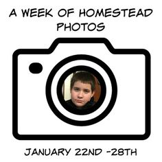 A Week of Homestead Photos January 22nd -28th