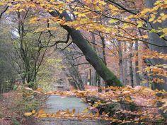 Herbst im Stikelkamper Wald, Ostfriesland
