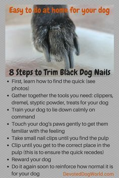 Trimming dog nails - Avoid making your dog's nails bleed when trimming them Find out how to cut black dog nails properly and then it's easy to do at home Visit DevotedDogWorld com and see info and photos on how to do it Clipping Dog Nails, Trimming Dog Nails, Schnauzer Grooming, Dog Grooming Tips, Dog Grooming Styles, Dog Paws, Pet Dogs, Dogs Pitbull, Dog Nail Bleeding