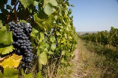 Burgenland: Wining and Dining on the Sunny Side of Austria