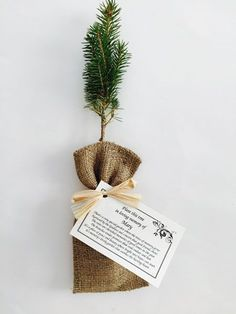 What an awesome funeral gift. Have friends and family grow trees in memory of your loved one. A timeless tribute and great for the environment!