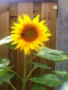 In mijn tuin...zie je de bij...