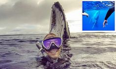 Aussie traveller captures incredible moment he's photobombed by whale