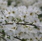 Beautiful and extraordinarily abundant flowers