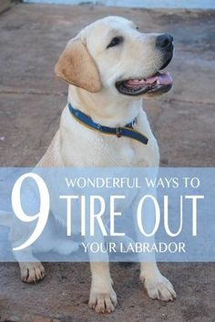 9 Wonderful ways to tire out your bouncy Lab @KaufmannsPuppy