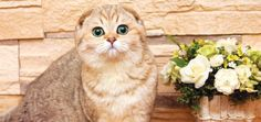 These are some super-easy ways to make your cat's day a little brighter!