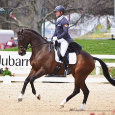Pedigree Analysis of Rolex Thoroughbreds - Eventing Nation - Three-Day Eventing News, Results, Videos, and Commentary