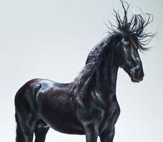 Jill-Greenberg-horse-bear5