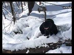 Как выжить в зимнем лесу. Выжить в России Серия 1 - YouTube