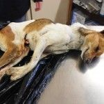 My name is Joshua… I died at the hands of an animal abuser. Jan 29 2014. http://thehendricksonpost.com/my-name-is-joshua-i-died-at-the-hands-of-an-animal-abuser/#sthash.vgQcCeBN.dpbs