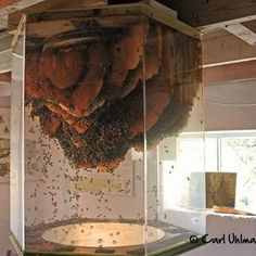 I have to have a working beehive in my dream home