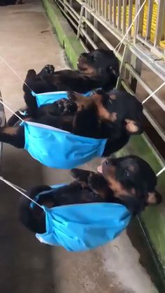 35 Funny Furry Animals To Brighten Your Day Funny animals,cute animals,baby animals Cute Little Animals, Cute Funny Animals, Funny Dogs, Cute Animal Videos, Funny Animal Pictures, Cute Videos, Animal Pics, Videos Funny, Cute Dogs And Puppies
