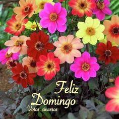 Bom dia queridos amigos (as ),hoje peço à Deus, paz,luz e alegria para nossos corações. L Feliz domingo pra todos vocês.