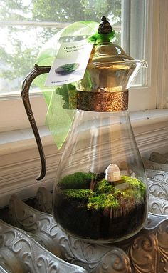 terrarium ~ Anything glass will do the trick! Coffee maker is broken and you don't want to throw out the pot? TERRARIUM! :D