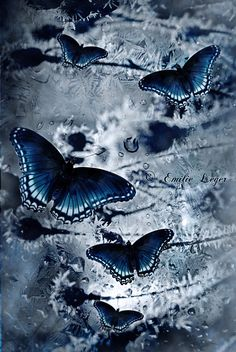 Waiting For Spring by emilieleger Love Blue, Blue Grey, Blue And White, Butterfly Wallpaper, Blue Butterfly, Butterfly Pictures, Himmelblau, Marine Blue, Blue Aesthetic