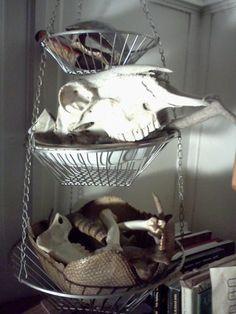 Animal parts at Half Embalmed
