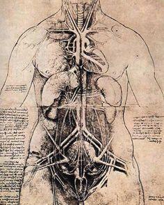 Leonardo da Vinci was certainly an astonishingly talented man but not everyone thought him so. Indeed many only saw Leonardo da Vinci the heretic. Leonard De Vinci Inventions, Da Vinci Inventions, Anatomy Drawing, Anatomy Art, Body Anatomy, Human Anatomy, Greys Anatomy, Leonardo Da Vinci Pinturas, Leonardo Da Vinci Biography