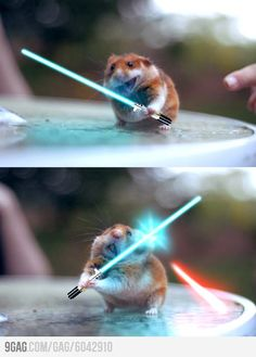 Images leaked from new Star Wars film. We don't need no stinking Yoda! Who doesn't like hamsters fighting with lifesavers! Cute Little Animals, Cute Funny Animals, Funny Cute, Funny Animal Memes, Funny Animal Pictures, Pictures Images, Funny Hamsters, The Meta Picture, Star Wars Film